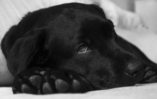 Quelles sont les maladies canines les plus fréquentes ?