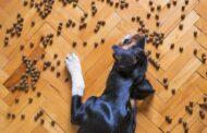 Tout savoir sur l'alimentation bio pour chien