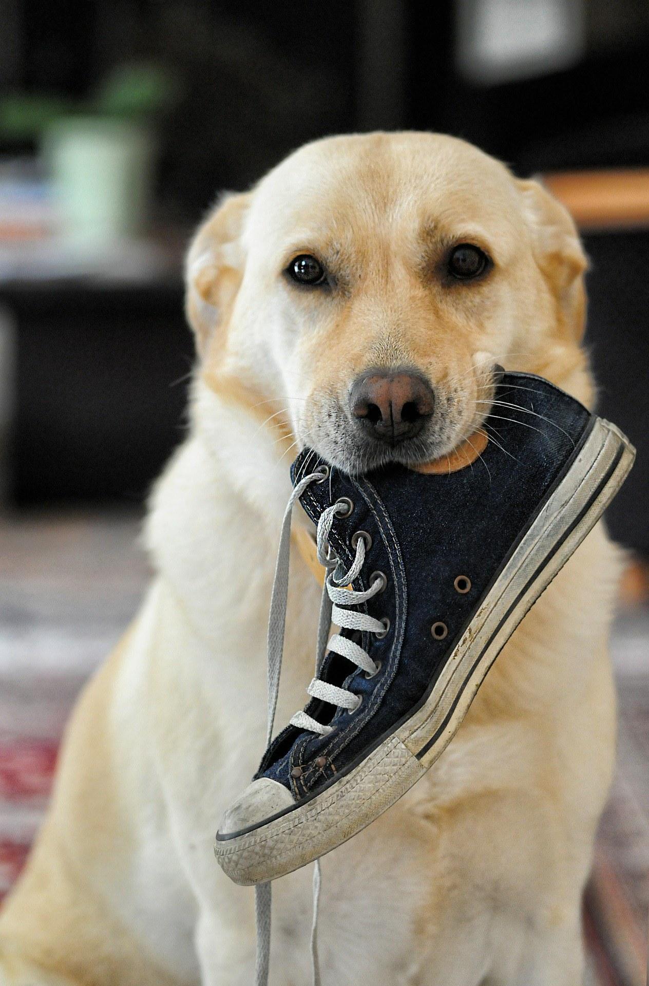 Comment maîtriser un chien destructeur : nos conseils