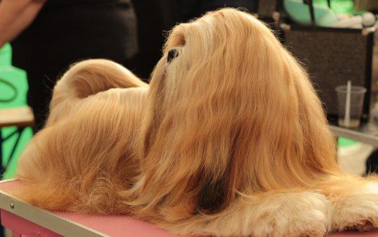 Comment entretenir les poils de son chien ?