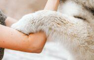 Comment bien caresser votre chien: nos conseils