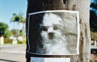 Comment éviter à votre chien d'être volé ?