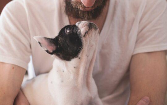 Comment gagner la confiance de votre chien : nos conseils