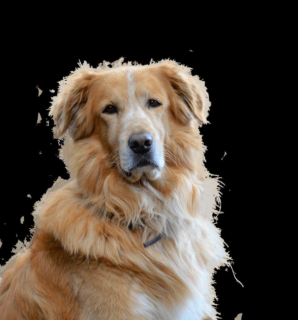 poil chien soin