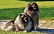 Quelques astuces pour faire briller le poil de votre chien